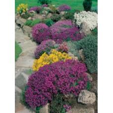 FIORI MIX cveća za ivičnjake i kamene bašte